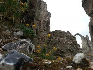 Ruine | A. Fischer 5/2014