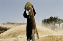 Getreideernte in Ägypten. picture alliance / AP Photo