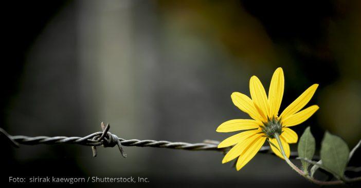 Stacheldraht Blume Freiheit