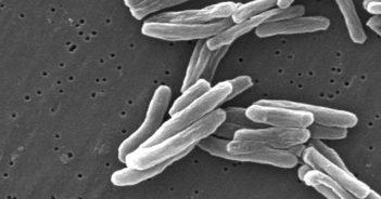 tuberkulose keime bakterien