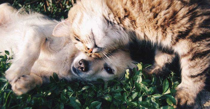 Gesundheitsvorsorge auf vier Pfoten: erstaunliche Wirkung von Tieren