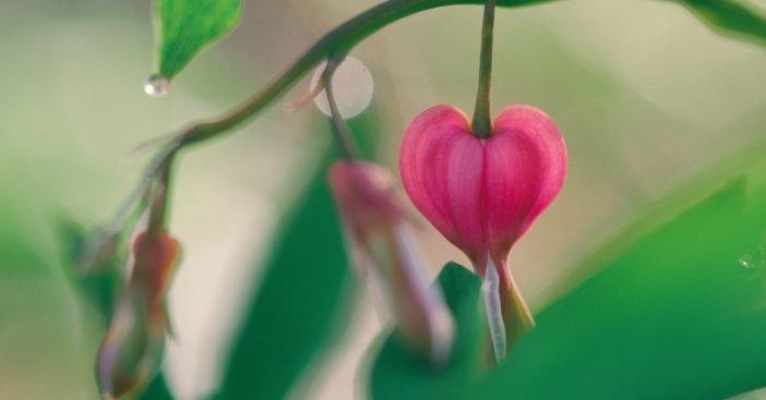 Q10 – der besondere Schutz fürs Herz – weil es das Wichtigste ist!