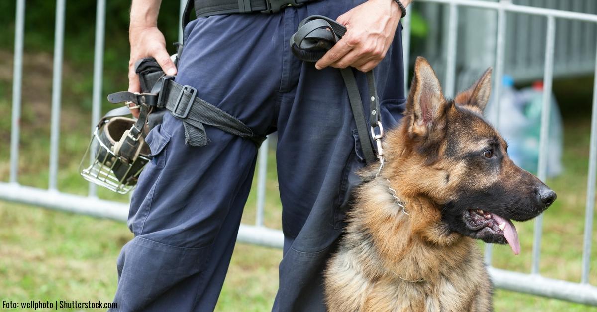 Polizei-Hund-Spuerhund-Schaeferhund.jpg